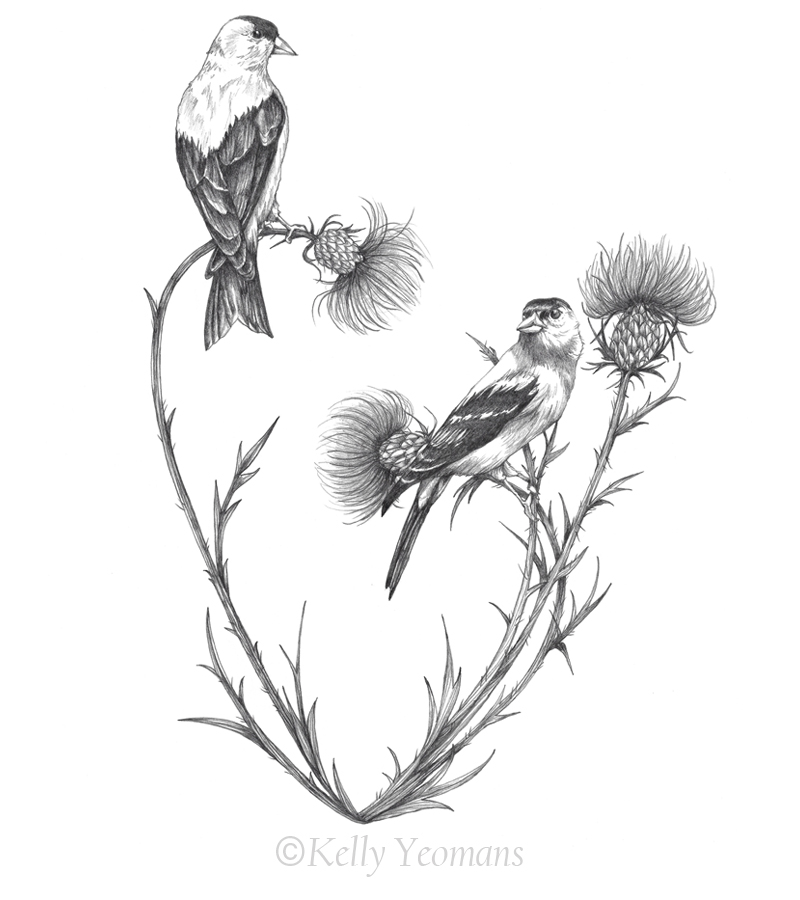 Goldfinch Pencil