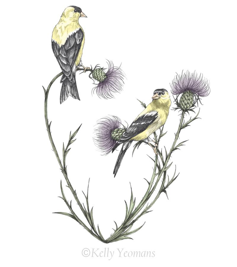Pencil drawing bird illustration