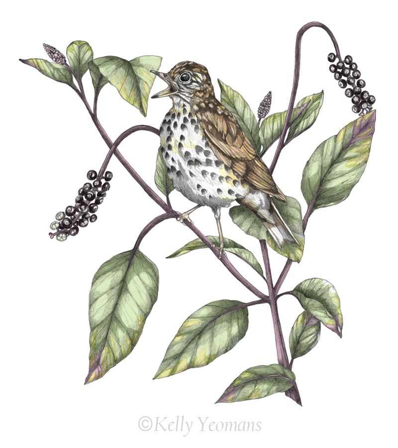 Nature Art Illustration