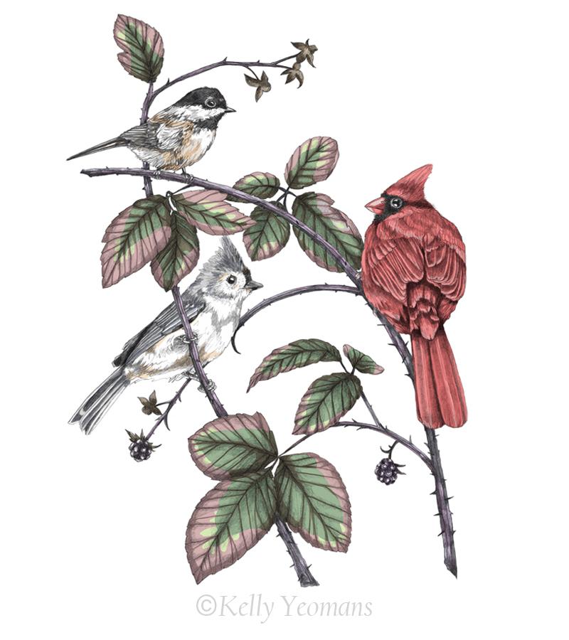 Winterbirds_Web