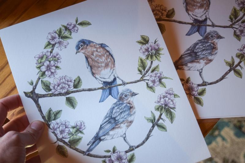 Bluebirds & Apple Blossoms Art Print
