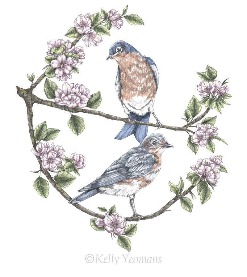 nature art bird illustration